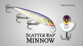 scatter minnow